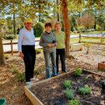 Herb Garden Planting